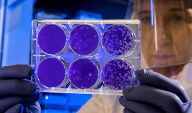 【COVID-19】世衛正式將新型肺炎病毒定名+常見問題整合