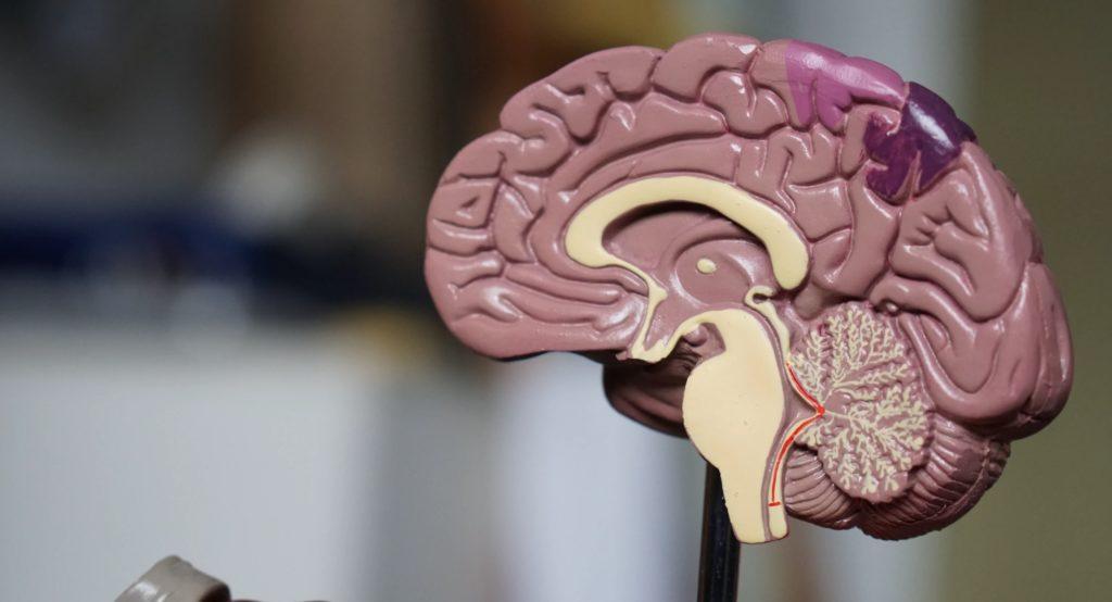 腦腫瘤=腦癌?